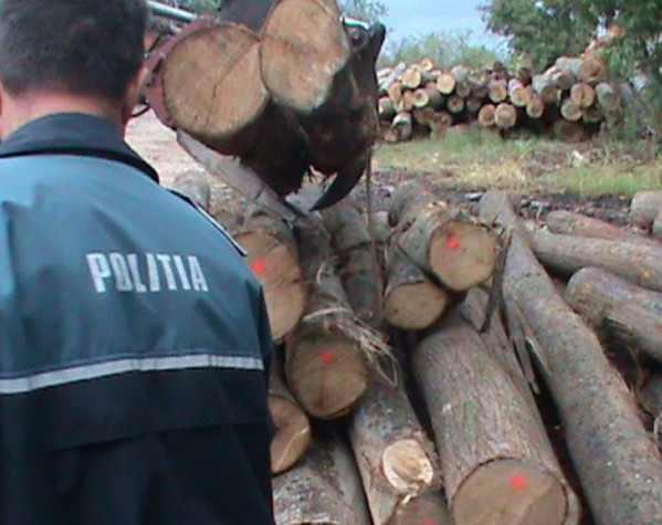 lemne padure