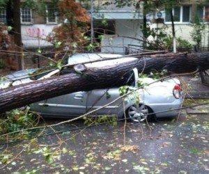 Vântoasa de vineri noaptea din Arad a doborât zeci de copaci care au căzut pe maşini