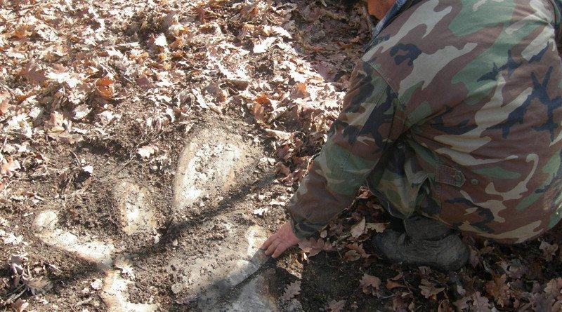 Un silvicultor aduce acuzaţii grave: poliţişti şi angajaţi ai DSA ar fi încercat să muşamalizeze jaful de la Valea Mare