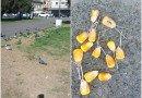 Cruzime atroce: un copil a găsit zeci de capcane pentru porumbei în Piața Avram Iancu