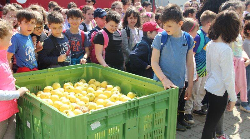 campanie fructe