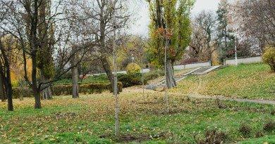 Au fost plantaţi 447 arbori în municipiu