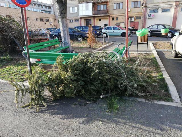 Sursă foto Vocea Străzii Arad România